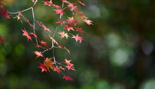 秋月での即興コンサート*今井てつ&大塚れな